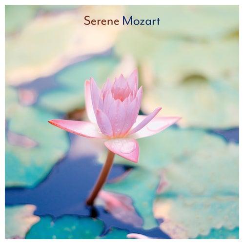 Serene Mozartの画像