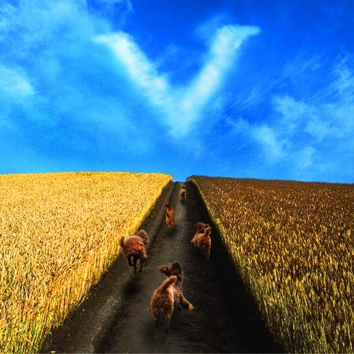 田園の画像